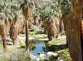 Indian Canyons stream