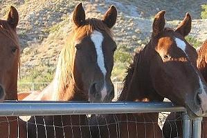 palm springs horseback riding, coachella valley, southern california outdoor activities